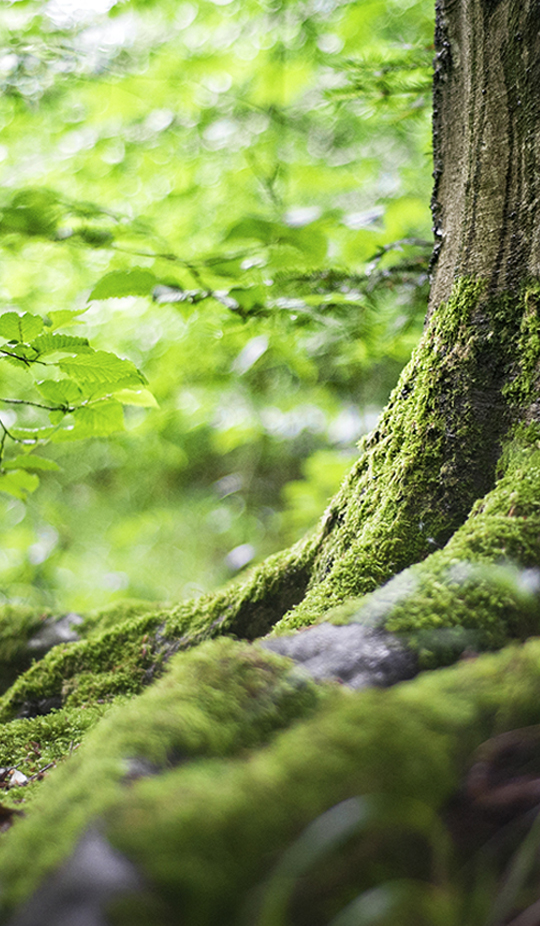 Sfeerbeeld 100% Pure Wood